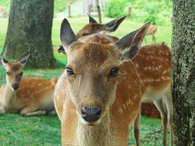sika - 奈良で「ものづくり」ならアンシャンテラボです。