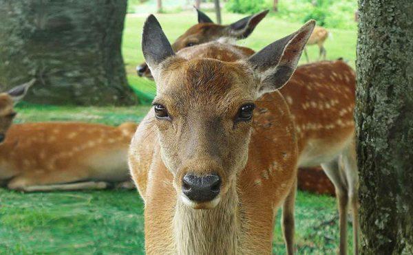 奈良で「ものづくり」ならアンシャンテラボです。