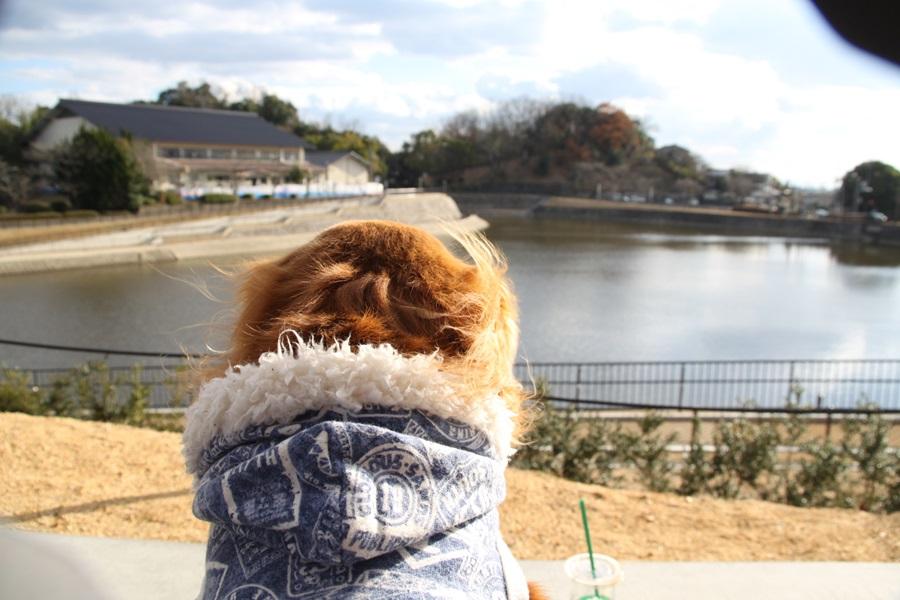 20180107 6 - スターバックスコーヒー・奈良鴻ノ池運動公園店に行って来ました。