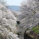 20180330 1 150x150 - 佐保川の桜並木