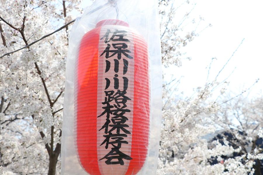 20180330 9 - 佐保川の桜並木