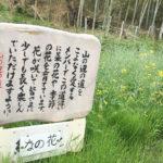 15nanohana 150x150 - 日本最古の道 山野辺の道