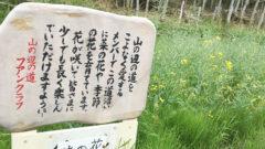 15nanohana 240x135 - 日本最古の道 山野辺の道