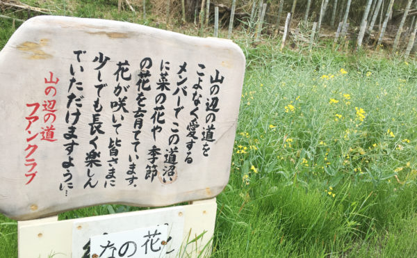 15nanohana 600x371 - 日本最古の道 山野辺の道