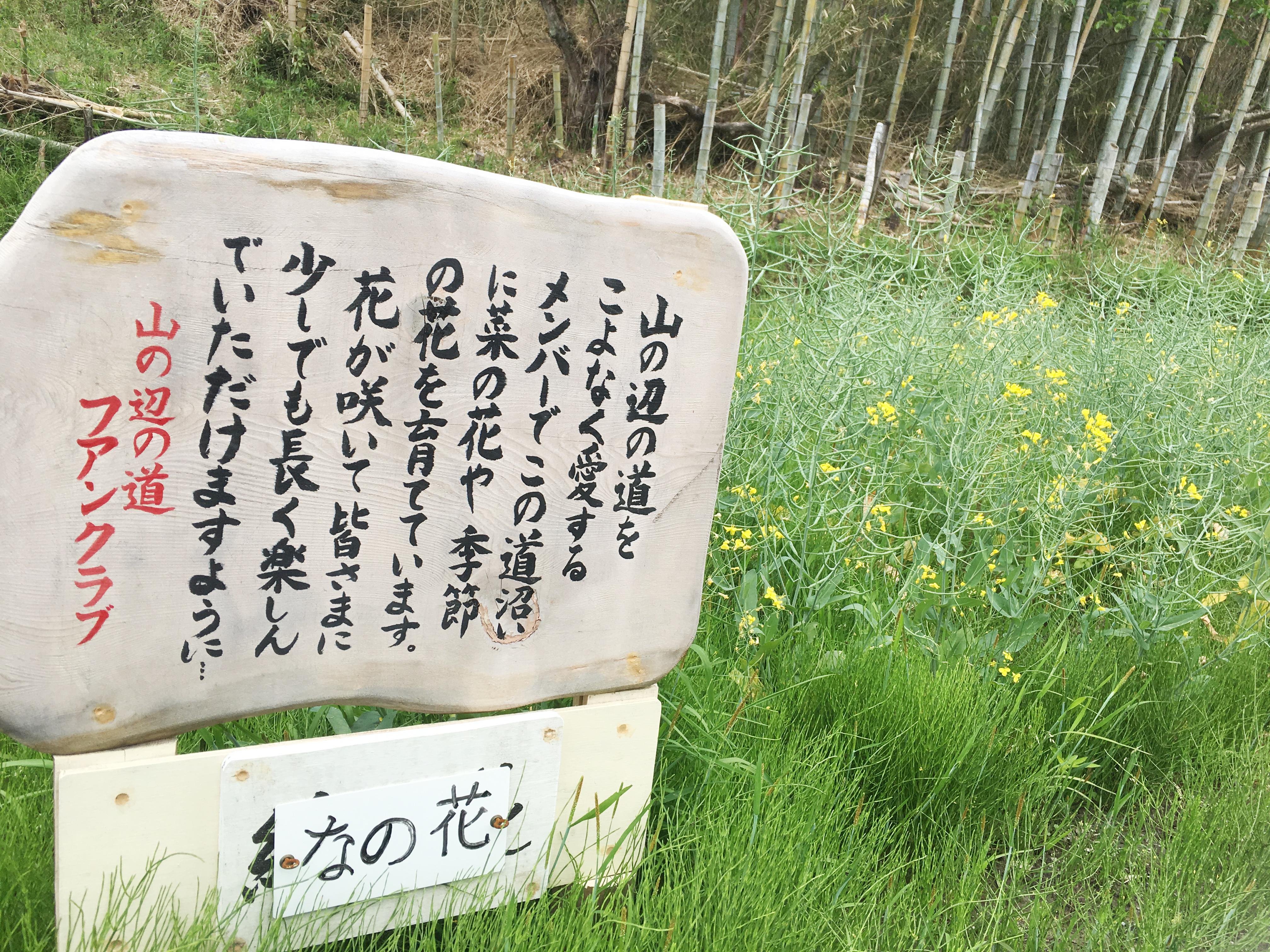 15nanohana - 日本最古の道 山野辺の道