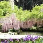 20180501 14 150x150 - 春日大社神苑・萬葉植物園へ行ってきました。