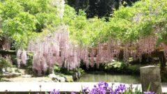 20180501 14 240x135 - 春日大社神苑・萬葉植物園へ行ってきました。