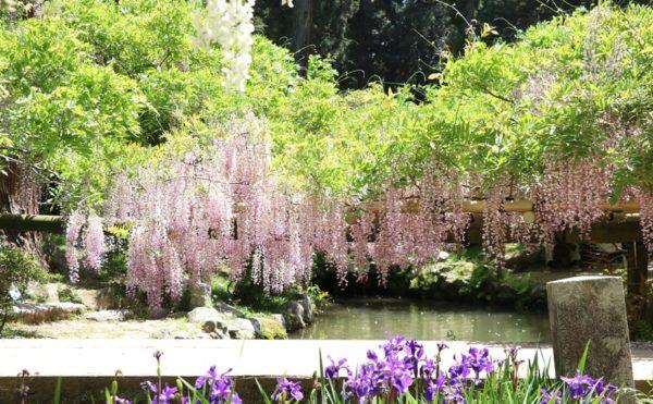 20180501 14 600x371 - 春日大社神苑・萬葉植物園へ行ってきました。