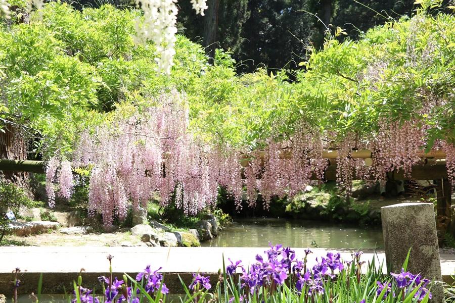20180501 14 - 春日大社神苑・萬葉植物園へ行ってきました。
