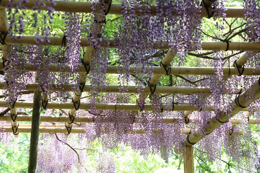 20180501 16 - 春日大社神苑・萬葉植物園へ行ってきました。