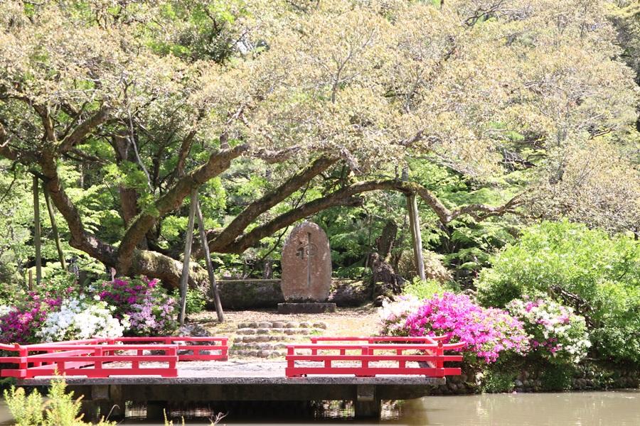 20180501 8 - 春日大社神苑・萬葉植物園へ行ってきました。