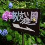 DSC1592 e1530518674391 150x150 - 矢田寺・あじさい園