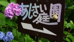 DSC1592 e1530518674391 240x135 - 矢田寺・あじさい園