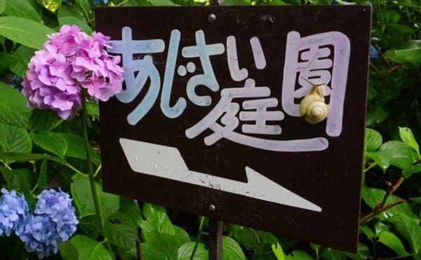 DSC1592 e1530518674391 600x371 - 矢田寺・あじさい園