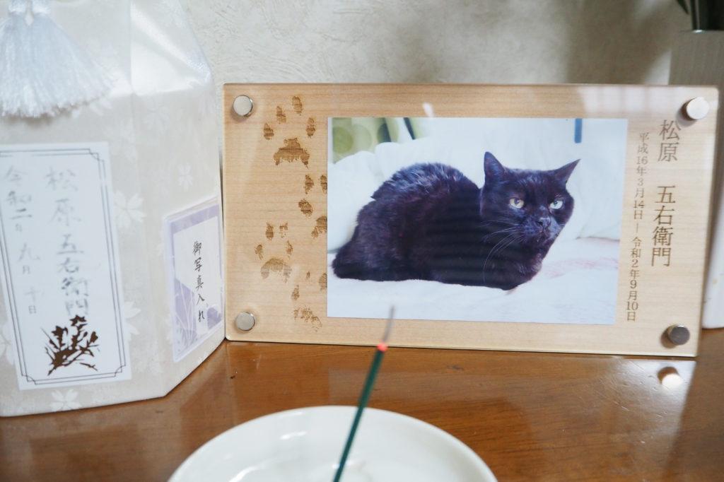Y1012362  1024x682 - お礼のメッセージを頂きました【愛猫のメモリアルフォトフレーム】
