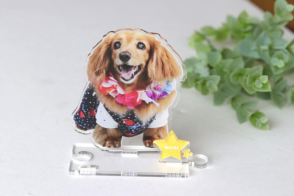 blog - 犬猫ちゃんのアクリルスタンド!うちの子の写真を立体インテリアに。ペットメモリアルな贈り物。