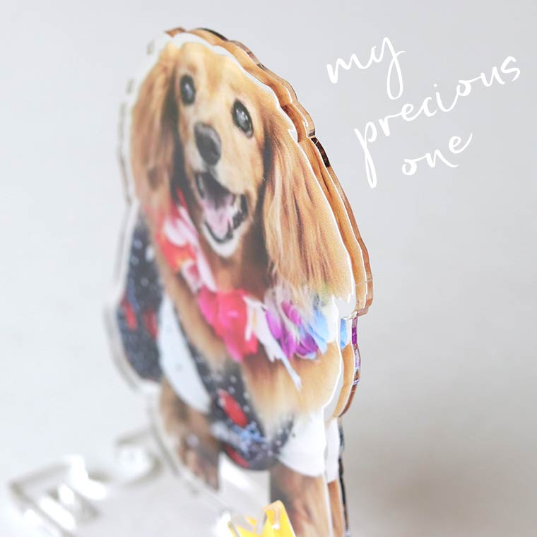 hm 50 23 1 - 犬猫ちゃんのアクリルスタンド!うちの子の写真を立体インテリアに。ペットメモリアルな贈り物。