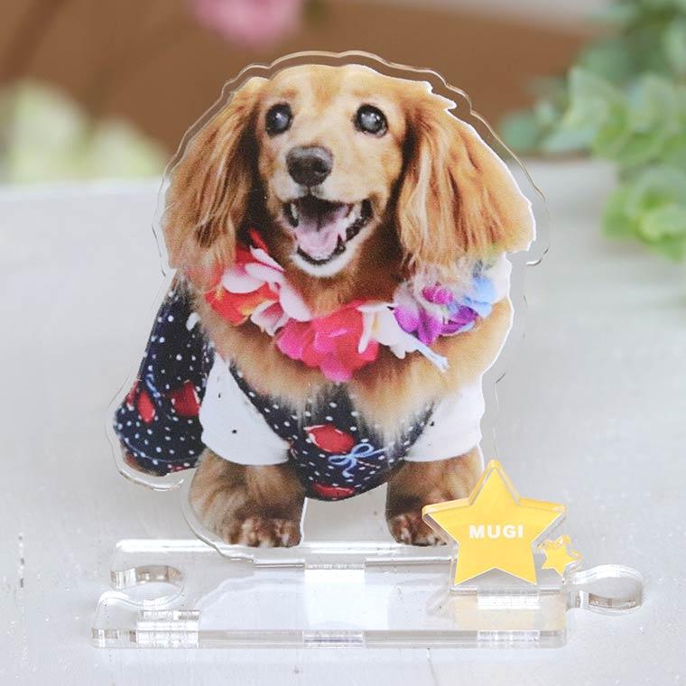hm 50 23 - 犬猫ちゃんのアクリルスタンド!うちの子の写真を立体インテリアに。ペットメモリアルな贈り物。